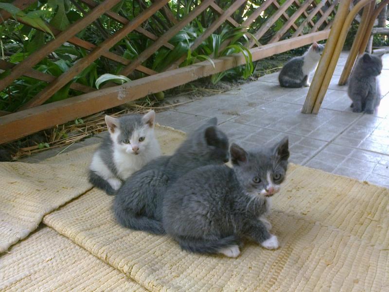 Darujem mačiatka - Inzercia mačiek - bazar - MAXbazar.sk 843ab9f32d7