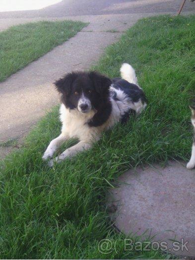 Darujem psa - Inzercia psov a šteniat - bazar - MAXbazar.sk 266b4a91121