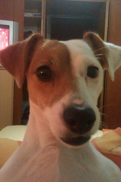 darujem psa - Inzercia psov a šteniat - bazar - MAXbazar.sk 2d91bc78067