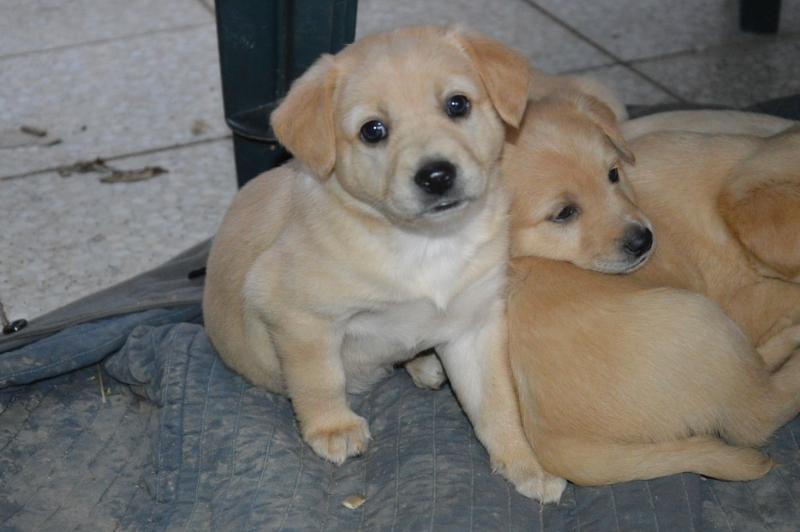 3f9d22924 Darujem šteniatko - Inzercia psov a šteniat - bazar - MAXbazar.sk