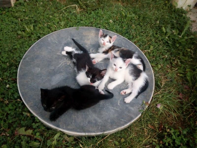 4 pritulne maciatka hladaju domov - Inzercia mačiek - bazar ... f71f5626418